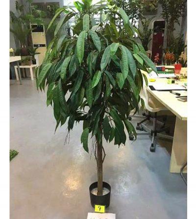 Ficus Ali Multi | 2.1 mts | 700 Hojas