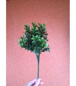 pasto-boxwood-pp4036