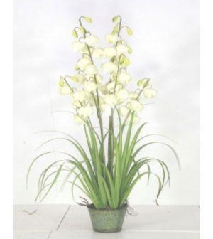 pasto-flor-campana-blanca-2231