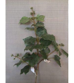 ama-hipericum-80cm-351-1390