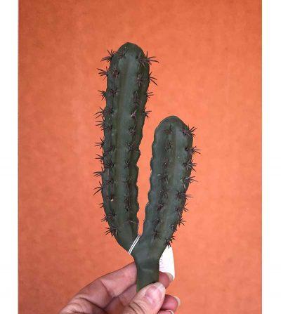 cactus-finger-20cm-cactus03