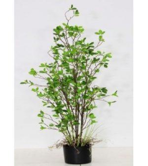 arbusto-hoja-chica-122cm-2469