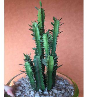 set-de-cactus-x6-cactus14