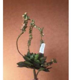 cactus-con-flor-652gc03-ph
