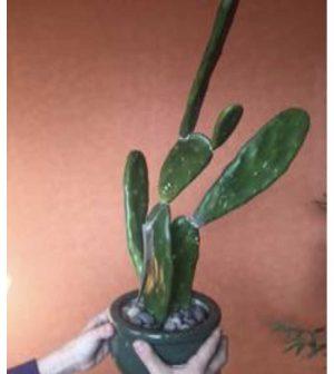 Cactus Paleta 45cm Cactus15