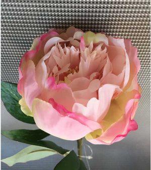 peonia-rosa-simple-45cm-ym07457t-0618-g001-p038-t
