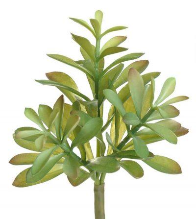 pasto-succulenta-25cm-cm0110-gr