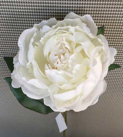 peonia-blanca-simple-45cm-ym07457t-0618-g001-w026-t