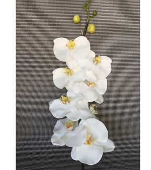 orquidea-mediana-8-flores-g253a-0272