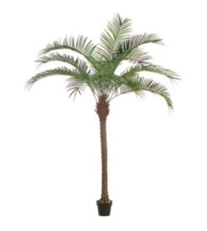palmera-phoenix-183cm-g377-0072-3-pt