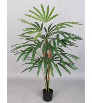 palmera-rhapis-excelsa-150cm-g377-0080-5-pt