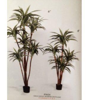 dracena-variega-verde-blanco-p1626