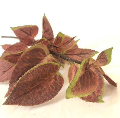 pasto-burdeo-verde-95246-bu