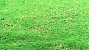 carpeta-de-musgo-100cm-g477-0006