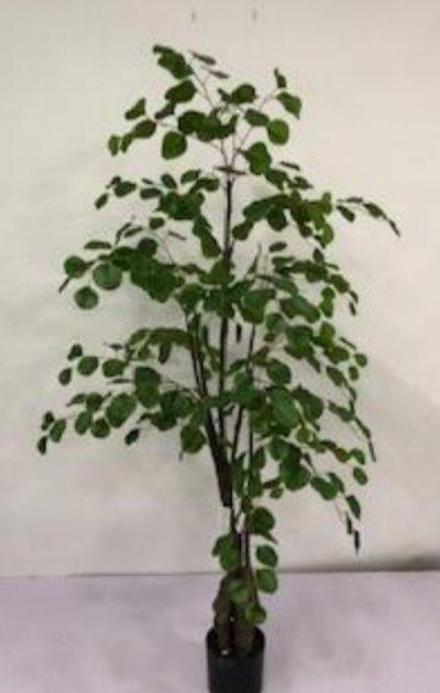 arbol-eucalipto-150cm-g377-0105-5