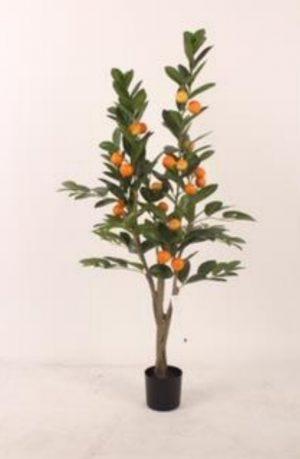 mandarino-120cm-g377-0104-5