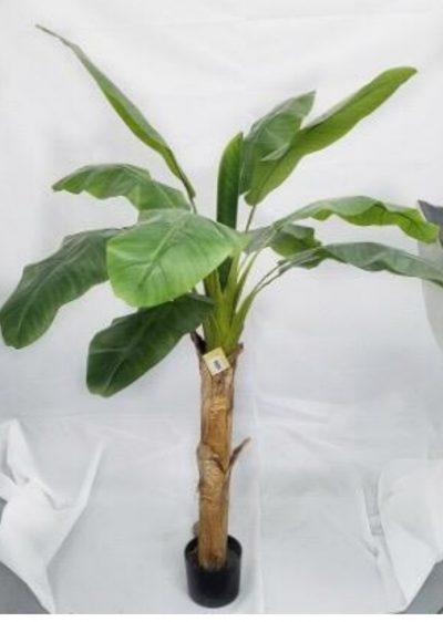banano-175cm-g260-0078-175
