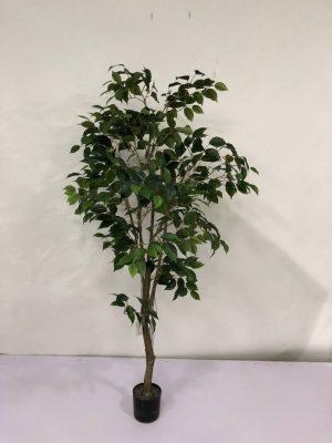 Arbol Ficus 1,50m #G377-0066-5-PT