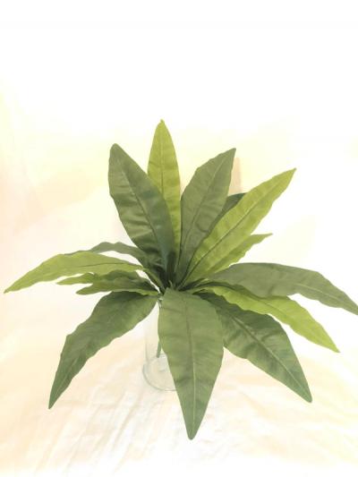 helecho-nido-de-pajaro-53cm-g377-0037