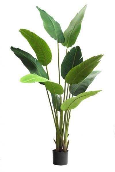 palmera-strelitzia-flor-del-pajaro160cm-g497-0003-160