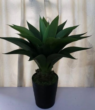 agave-verde-con-hoja-cerrada-75-cms-g497-0002-pt