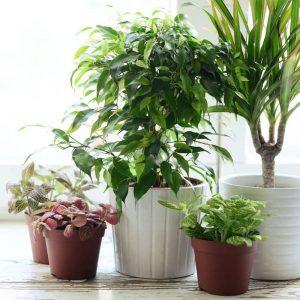 Árboles y Plantas Artificiales